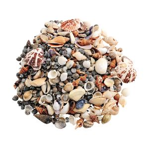 Sea Shells, Small - 1 lb.
