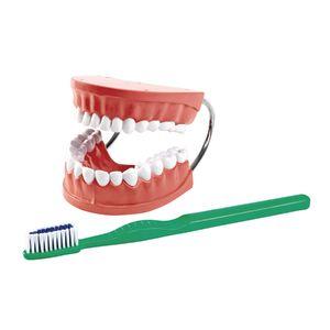 Healthy Teeth Demonstration Model