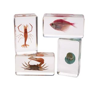 Excellerations® Acrylic Under the Sea Specimens - Set of 4
