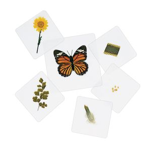 Excellerations® Laminated Specimen Set 28 Pieces