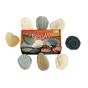 Fossil Stones - Set of 8