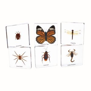 Mini Acrylic Bug Specimens Set of 6