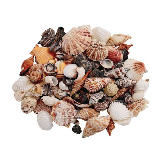 Sea Shells, Medium - 1 lb.