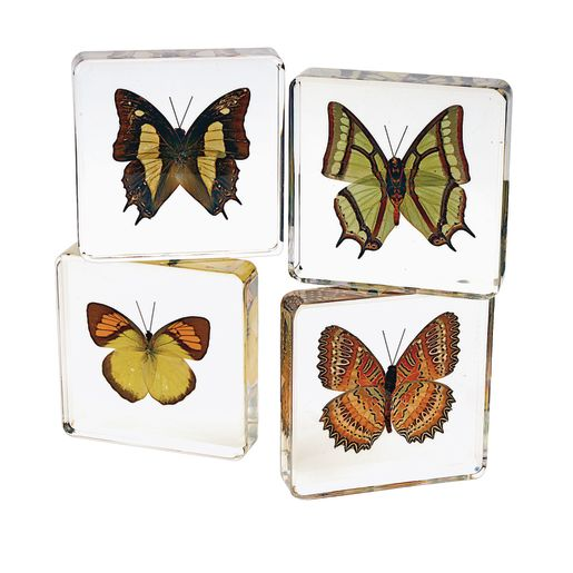 Image of Excellerations Acrylic Butterfly Specimens - Set of 4