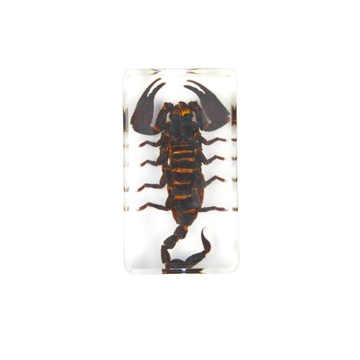 Excellerations® Acrylic Scary Bug Specimens - Set of 4