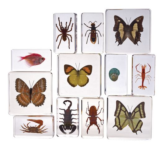 Image of Excellerations Acrylic Specimens Science Collection - Set of 12