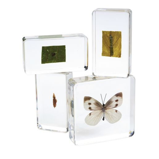 Excellerations® Acrylic Life Cycle Specimens - Set of 4