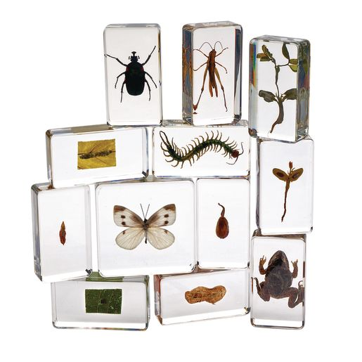 Image of Excellerations Acrylic Specimens - Set of 12
