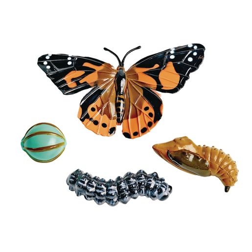 Image of Butterfly Life Cycle Models