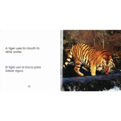 Animals Big Book Set of 6