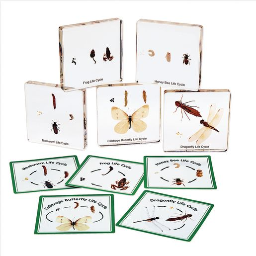 Image of Excellerations Insect Life Cycle Specimens Set of 5