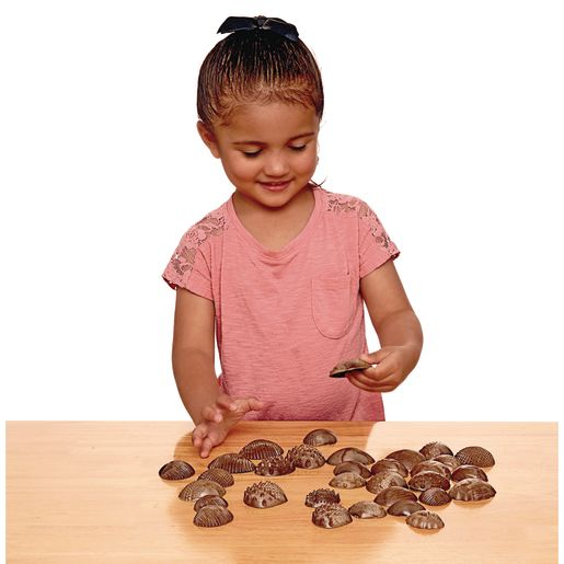 Tactile Shells for Sensory Exploration - 36 pcs