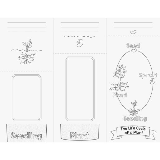 Build Your Own Flip Books? - Life Cycle Of A Plant