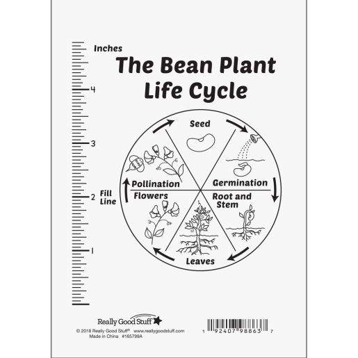 Life Cycle Of A Plant Kit