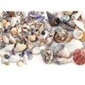 Sea Shells, Small & Medium Size - 2 lbs.