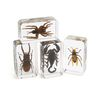 Excellerations® Acrylic Specimens Science Collection - Set of 12