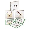 Excellerations® Insect Life Cycle Specimens Set of 5