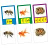 Small-Group Phoneme Photo Cards - 40 cards