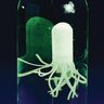 Science Learning Journals™ And SQUIDY™ Kit By Steve Spangler Science™ - 1 multi-item kit